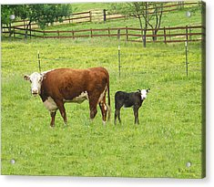 Mooma And Calf Acrylic Print