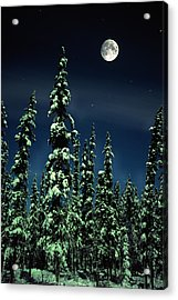Moon And Trees, Teslin, Yukon Acrylic Print by Robert Postma