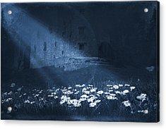 Moon Light Daisies Acrylic Print