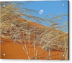 Moon Over Dune Acrylic Print