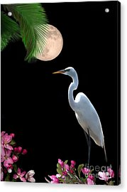 Moon Over Florida Acrylic Print by Betty LaRue