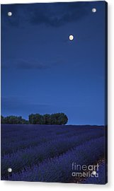 Moon Over Lavender Acrylic Print by Brian Jannsen