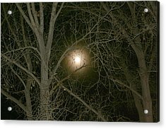 Acrylic Print featuring the photograph Moon Through The Trees by Laurel Talabere