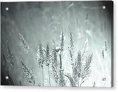 Moonlight Glow Acrylic Print by Terrie Taylor
