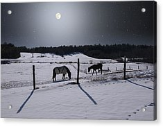 Moonlit Horses Acrylic Print