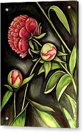 Moonlit Peonies Acrylic Print by Linda Nielsen
