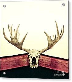 Moose Trophy Acrylic Print by Priska Wettstein