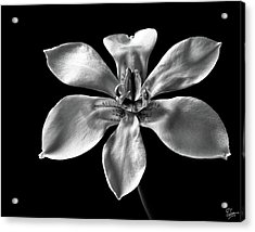 Acrylic Print featuring the photograph Morea In Black And White by Endre Balogh