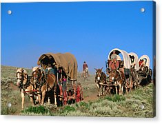 Mormons On Horse Carriages, Mormon Pioneer Wagon Train To Utah, Near South Pass, Wyoming, United States Of America, North America Acrylic Print