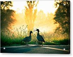 Morning Banter Acrylic Print