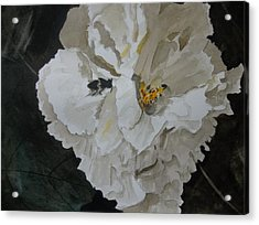 Morning Confederate Rose  Acrylic Print