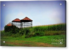 Morning Corn Acrylic Print by Perry Webster