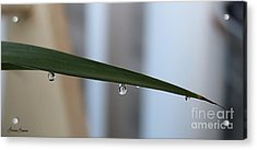 Morning Dew 2 Acrylic Print by Lorraine Louwerse