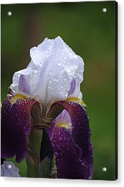 Morning Dew Iris Acrylic Print