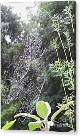 Morning Dew Acrylic Print by Michelle Welles