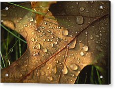 Morning Dew On Oak Leaf Acrylic Print