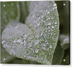 Morning Dew Acrylic Print by Tammye Nash