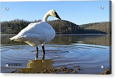 Acrylic Print featuring the photograph Morning Dip by Brian Stevens