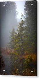 Morning Fall Colors Acrylic Print by Mike Reid
