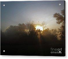 Morning Flight 1 Acrylic Print by Cedric Hampton