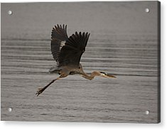 Acrylic Print featuring the photograph Morning Flight by Eunice Gibb