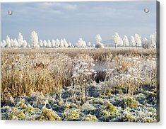 Morning Frost Acrylic Print by Duncan Shaw