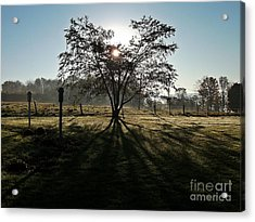 Morning Glory Acrylic Print by Christian Mattison