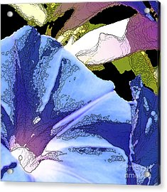 Morning Glory Acrylic Print by Artist and Photographer Laura Wrede