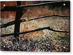 Morning Grass Acrylic Print by Carlos Diaz
