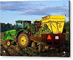 Morning Harvest Acrylic Print by Tim Fitzwater