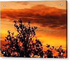 Morning In Silhouette Acrylic Print by Denise Workheiser