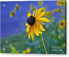 Acrylic Print featuring the photograph Morning Light by Nava Thompson
