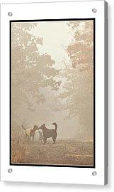Morning Meeting Acrylic Print