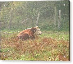 Morning Moo Acrylic Print by Wendy McKennon