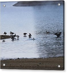 Morning On The Lake Acrylic Print