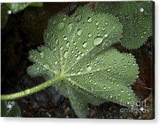 Morning Rain Acrylic Print