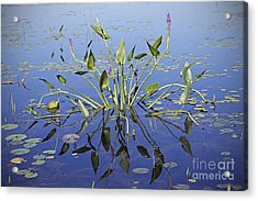 Acrylic Print featuring the photograph Morning Reflection by Eunice Gibb