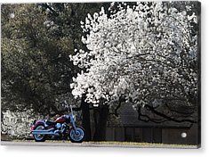 Morning Ride Acrylic Print by Janet Oh