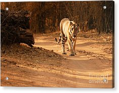 Acrylic Print featuring the photograph Morning Stroll by Fotosas Photography