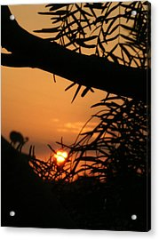 Acrylic Print featuring the photograph Morning Sun And Mesquite by Louis Nugent