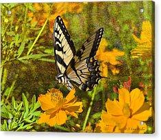Morning Tiger Swallowtail Acrylic Print by J Larry Walker