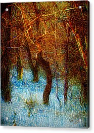 Morning Worship Acrylic Print by Mimulux patricia no No