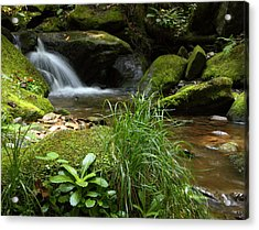 Moss And Water And Ambience Acrylic Print by Andrew McInnes