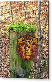 Acrylic Print featuring the pyrography Moss Hair by Paul Mashburn