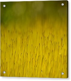 Moss In Yellow Acrylic Print