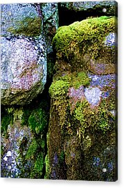Moss On Rocks Acrylic Print
