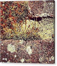 Moss Wall Abstract Acrylic Print