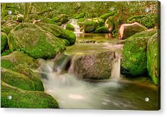 Acrylic Print featuring the photograph Mossy Beauty by Cindy Haggerty