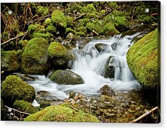 Mossy Greek Acrylic Print by Christopher Kimmel