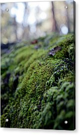 Mossy Log Acrylic Print by Carole Hinding